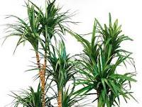 piante che puliscono aria in casa
