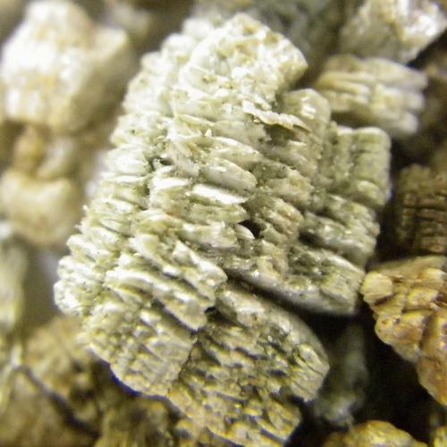 Vermiculite For Plants World of Irises...