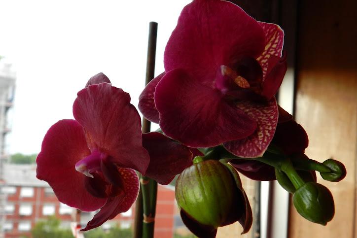 Para Aristeguy Norma Para marcar o ínicio de uma amizade 28/5/2011