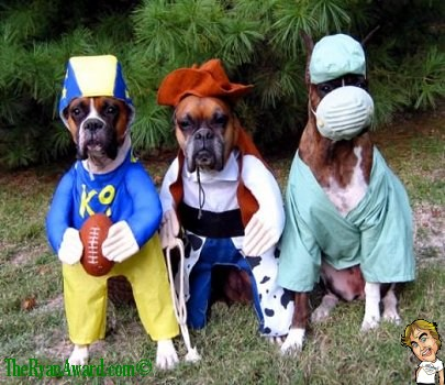 3 Awesome Boxer Dog Halloween Costumes & The Ryan Award - Funny Pictures and Funny Videos: 3 Awesome Boxer ...