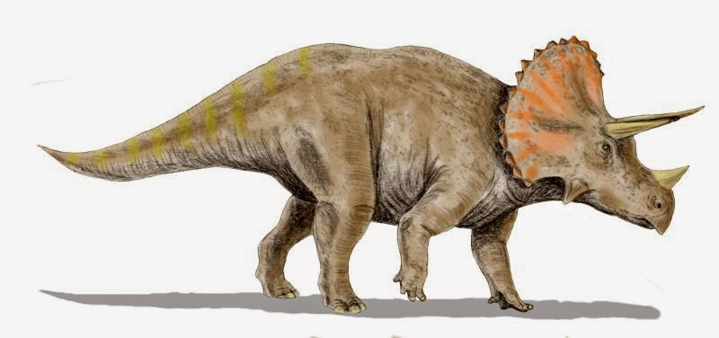 http://en.wikipedia.org/wiki/File:Triceratops_BW.jpg