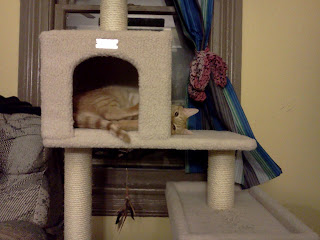 My cat Bela, an orange tabby, in his cat tree with half his body in the hut, head peaking out the other side