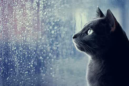 Cara Unik Mengatasi Galau Saat Musim Hujan