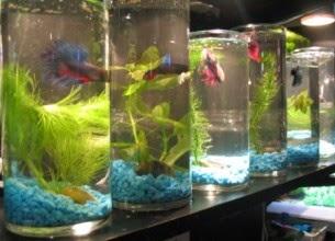 World of tanks fan 39 s blog interesting pet the series 4 for Betta fish water temp