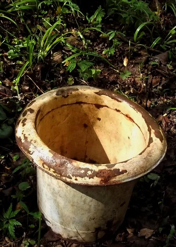 Regard perch dans une for t touloise - Curieux comme un pot de chambre ...