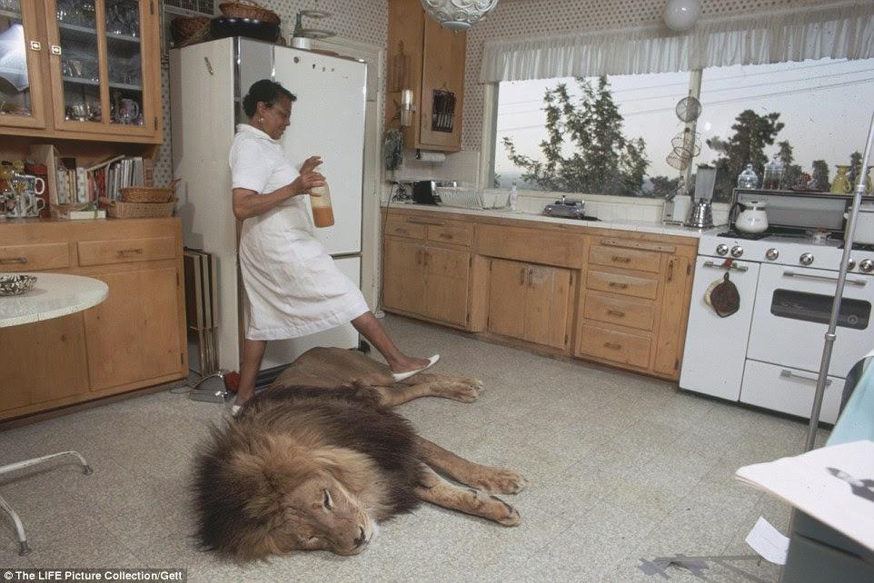 الخادمة تسير من فوق الأسد في المطبخ