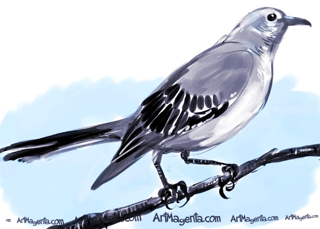 Northern Mockingbird sketch painting. Bird art drawing by illustrator Artmagenta