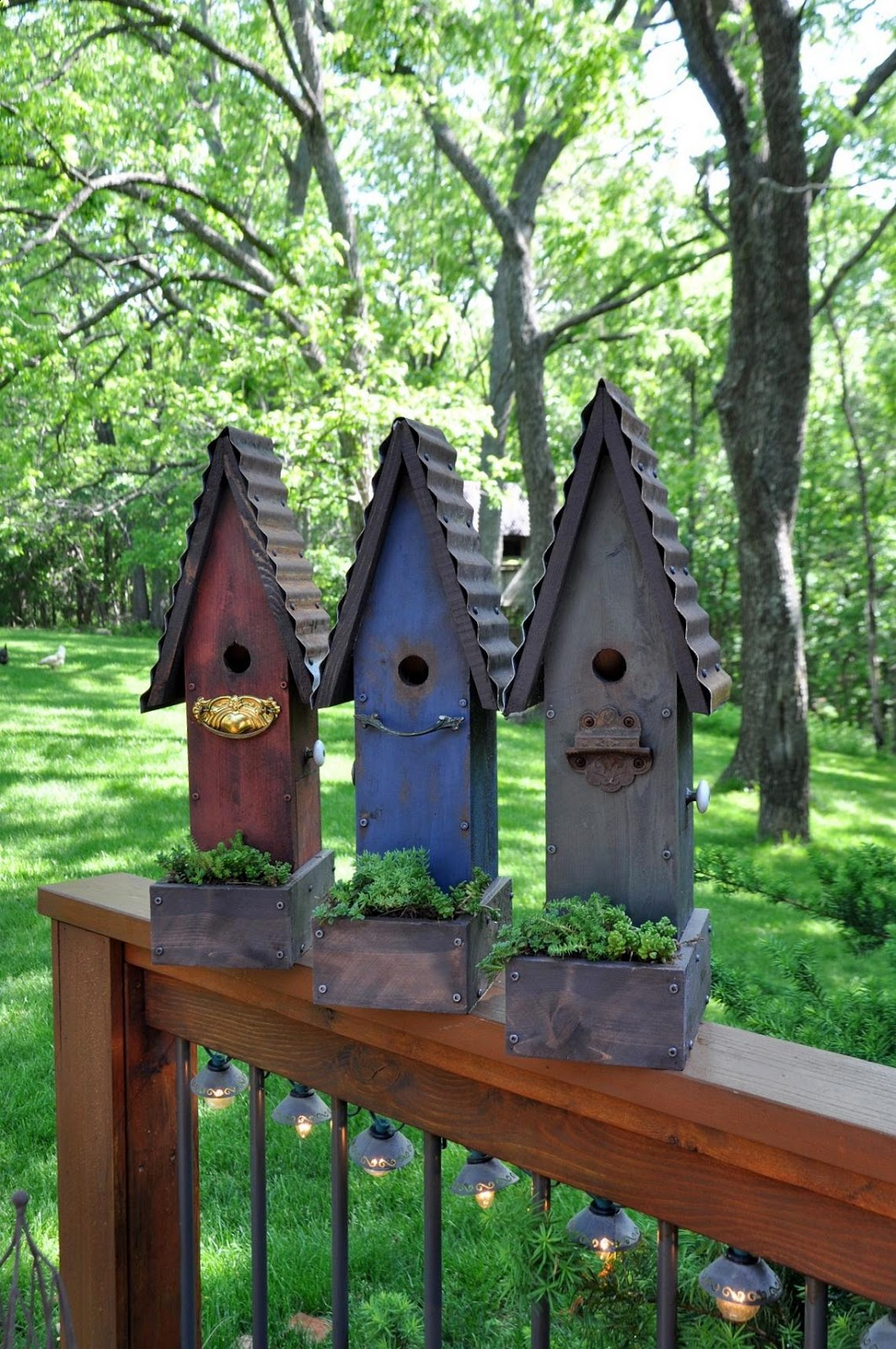 rebecca 39 s bird gardens products and photos