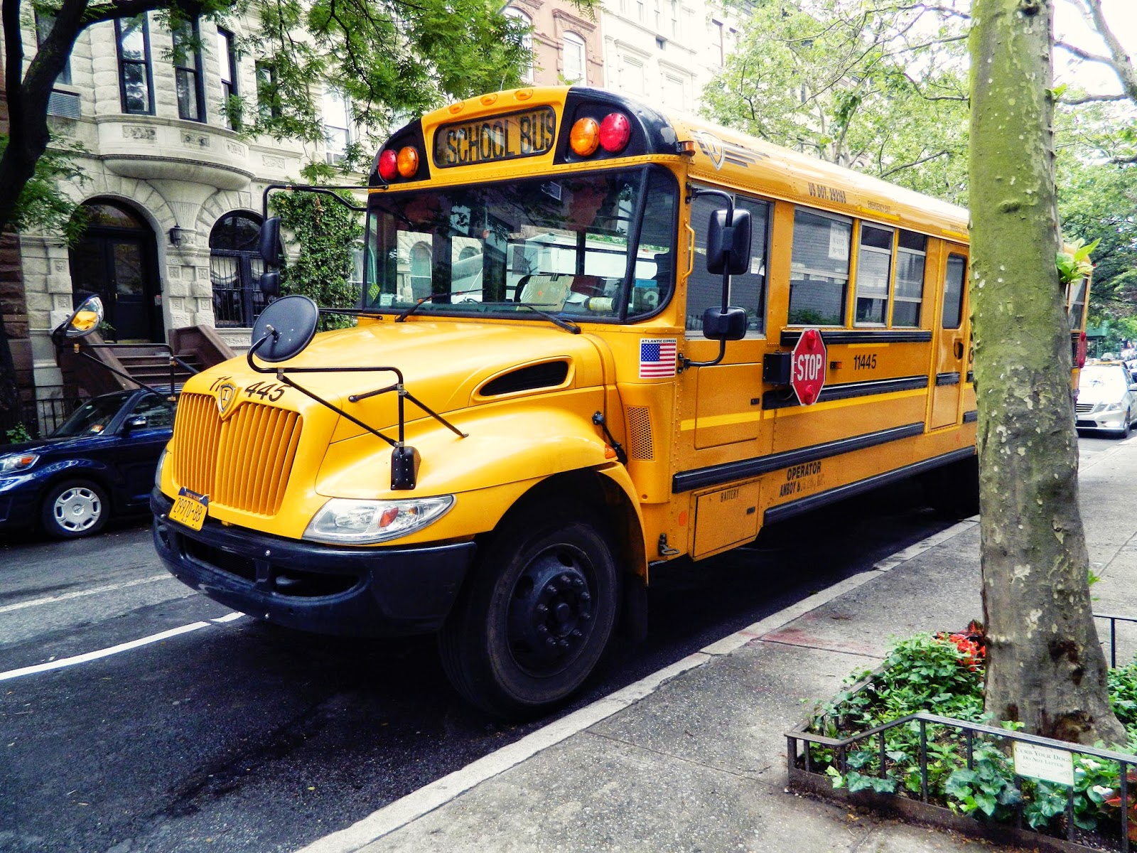 new york city street yellow school bus tree