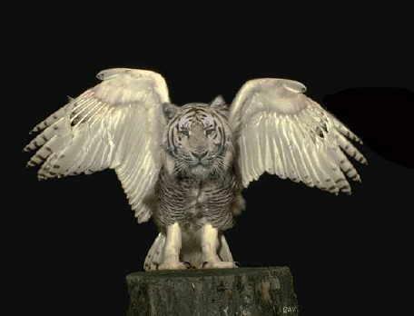 Sekarang ni harimau muda dah ada sayap garuda harap harap dengan