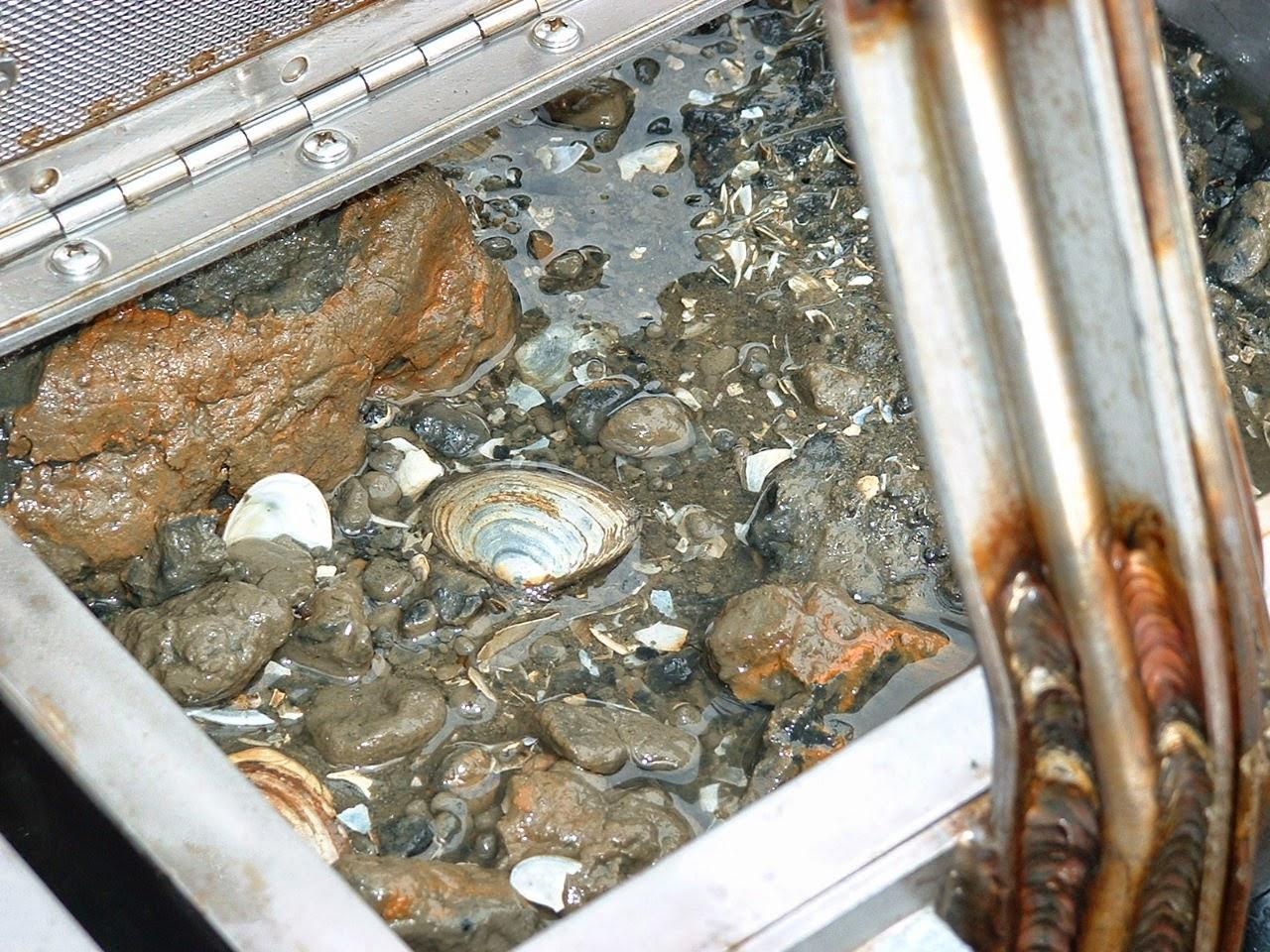 Washington Department Of Ecology April 2014 S320 Fuel Filter Puget Sound Sediment Sample