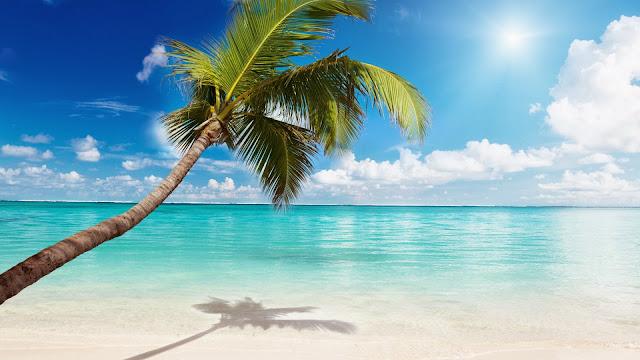 Paisajes de Palmeras en la Playas en HD