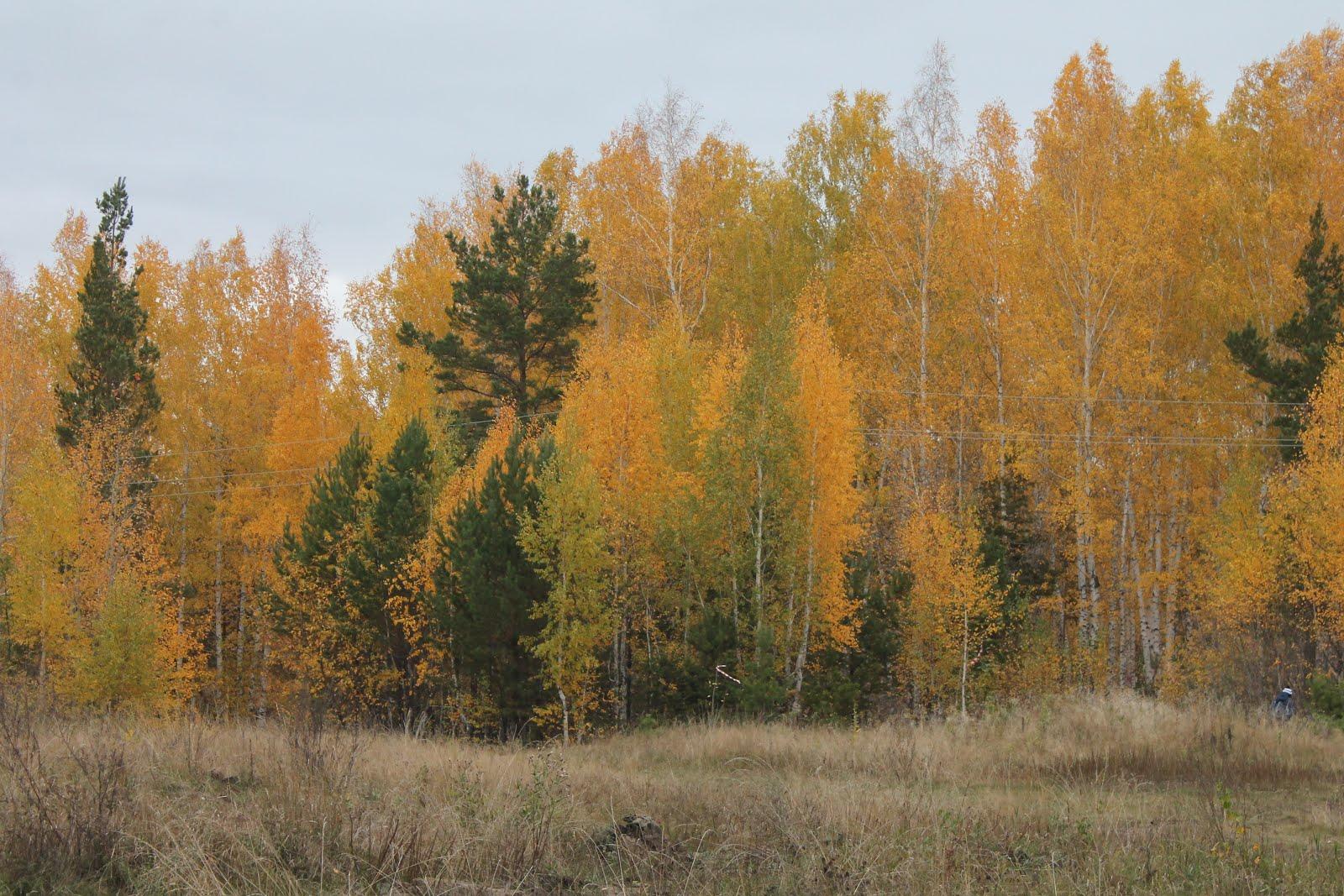 Прогулка в лес, 9.10.2016