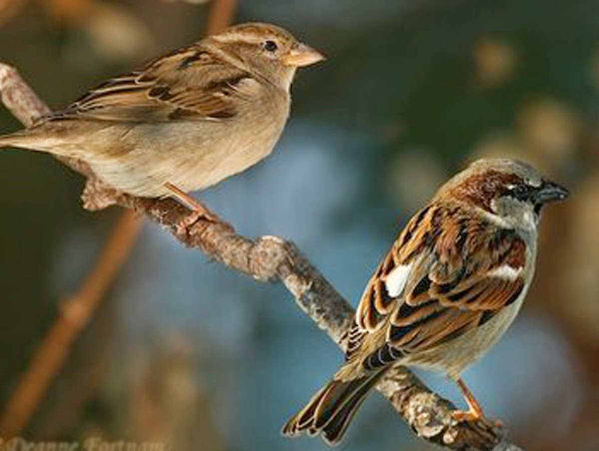 Raising Of Sparrow Pictures : Adventures of Raising Baby Birdie!: Triplet Aviary Happiness! And we ...