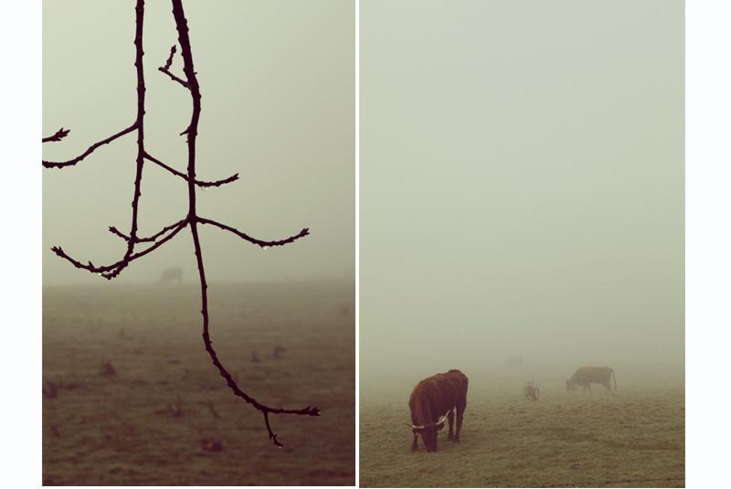 vache dans le brouillard