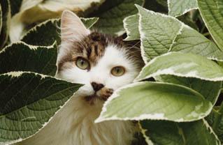 Adote um bichinho plantas t xicas para c es e gatos for Plantas toxicas gatos