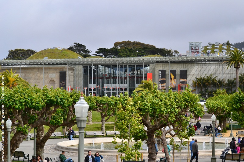 calacademy california academy sciences museum golden gate park things to do san francisco