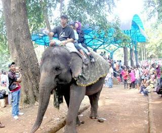 ragunan gajah