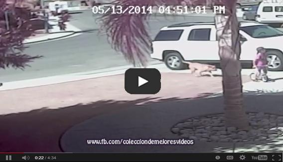 Un gato le salva la vida a un niño que es atacado por Un perro, Vídeo de animales,