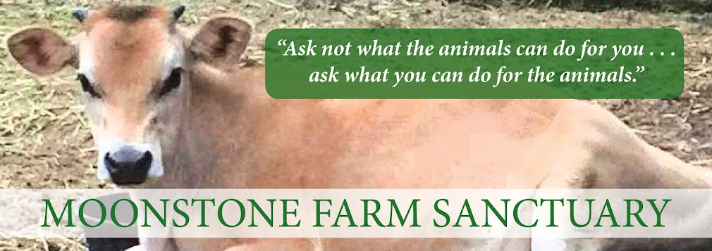 Moonstone Farm Sanctuary