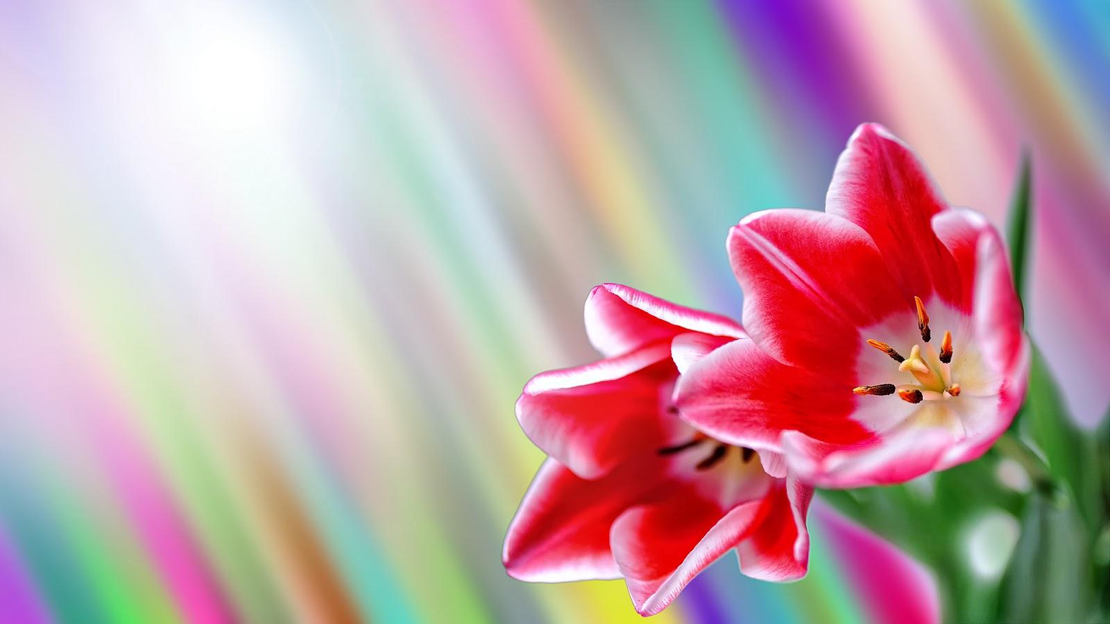 http://4.bp.blogspot.com/-tkb2wCbOnKA/T1RS5SugvuI/AAAAAAAACCk/7pNi0IEXB-s/s1600/spring_by_windylife-d3aib68.jpg