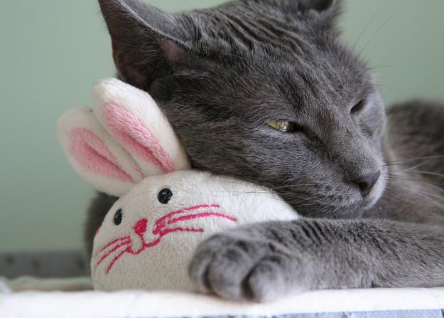 Игрушки для кота с фото