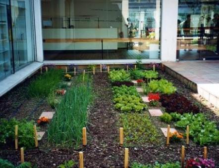 Como hacer una huerta organica en casa como se hace for Como aprender jardineria