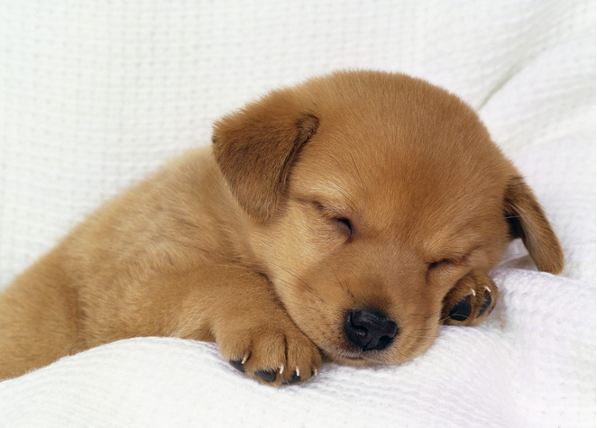 Puppy Training Tips for First Time Puppy Owner