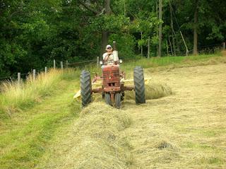 raking hayfield 1