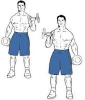Standing Alternated Biceps Curl