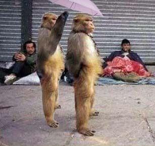 Foto Aksi Lucu Binatang