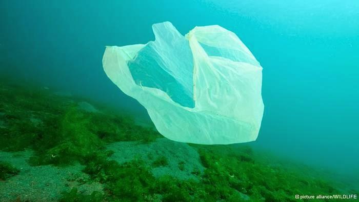 Sacolas plásticas poluem os oceanos do planeta e matam animais marinhos