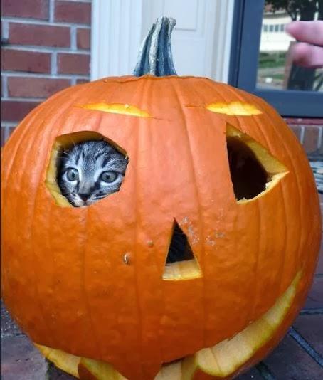 Imagenes de Halloween Imagenes Chistosas