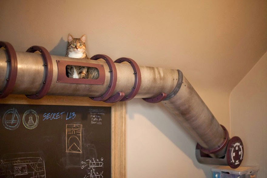 20 Awesome Furniture Design Ideas For Crazy Cat People