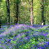 Colorful Flowers in Forest wide images photos