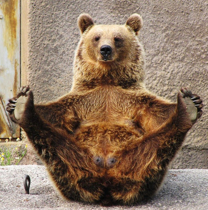 The Bear Who Practices Yoga