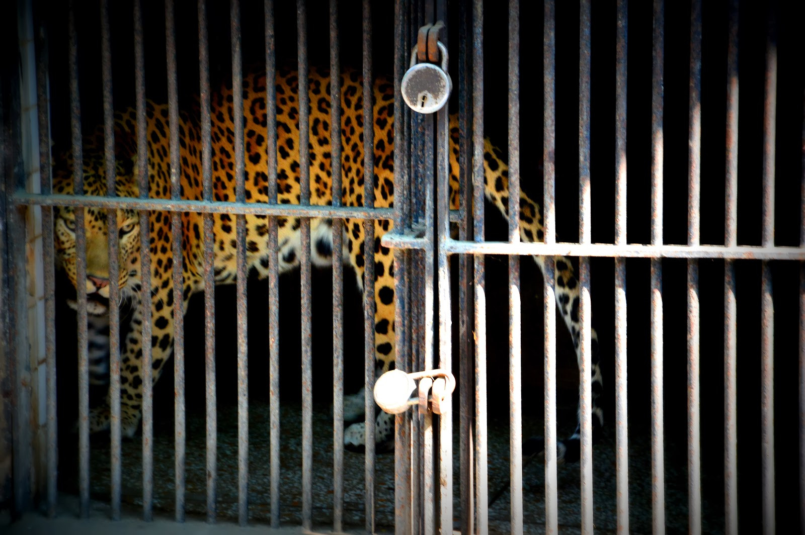 are zoos cruel Last chance for animals is a national, non-profit organization dedicated to eliminating animal exploitation through education, investigations, legislation, and media attention the.