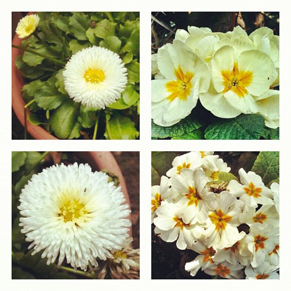 White Flowers Pablo Lara H