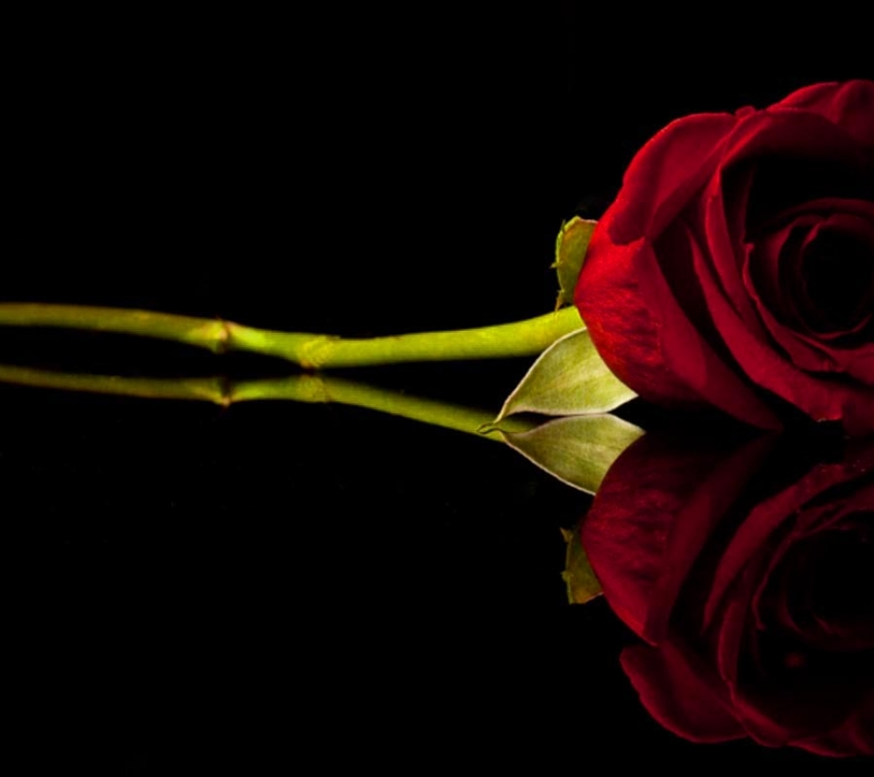 flowers_roses_b...