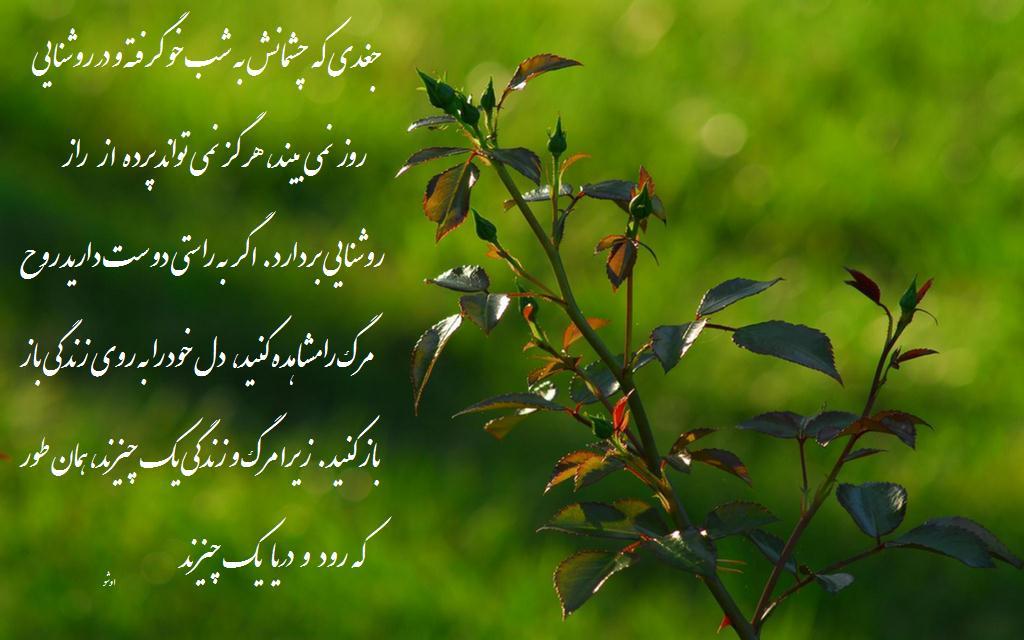 عکس نوشته ظلم