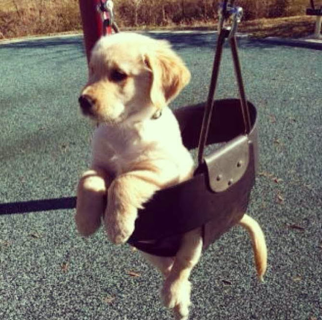 Cute dogs - part 3 (50 pics), cute dog sits in swing