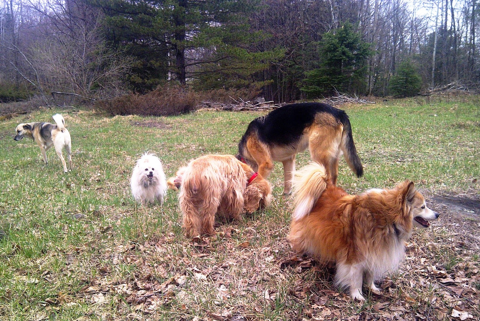 DIY Natural, Herbal Dewormers for Dogs and Cats