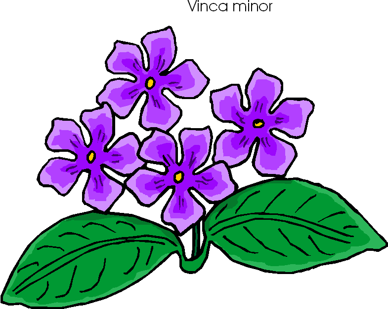 Vinca Minor Free Flower Clipart