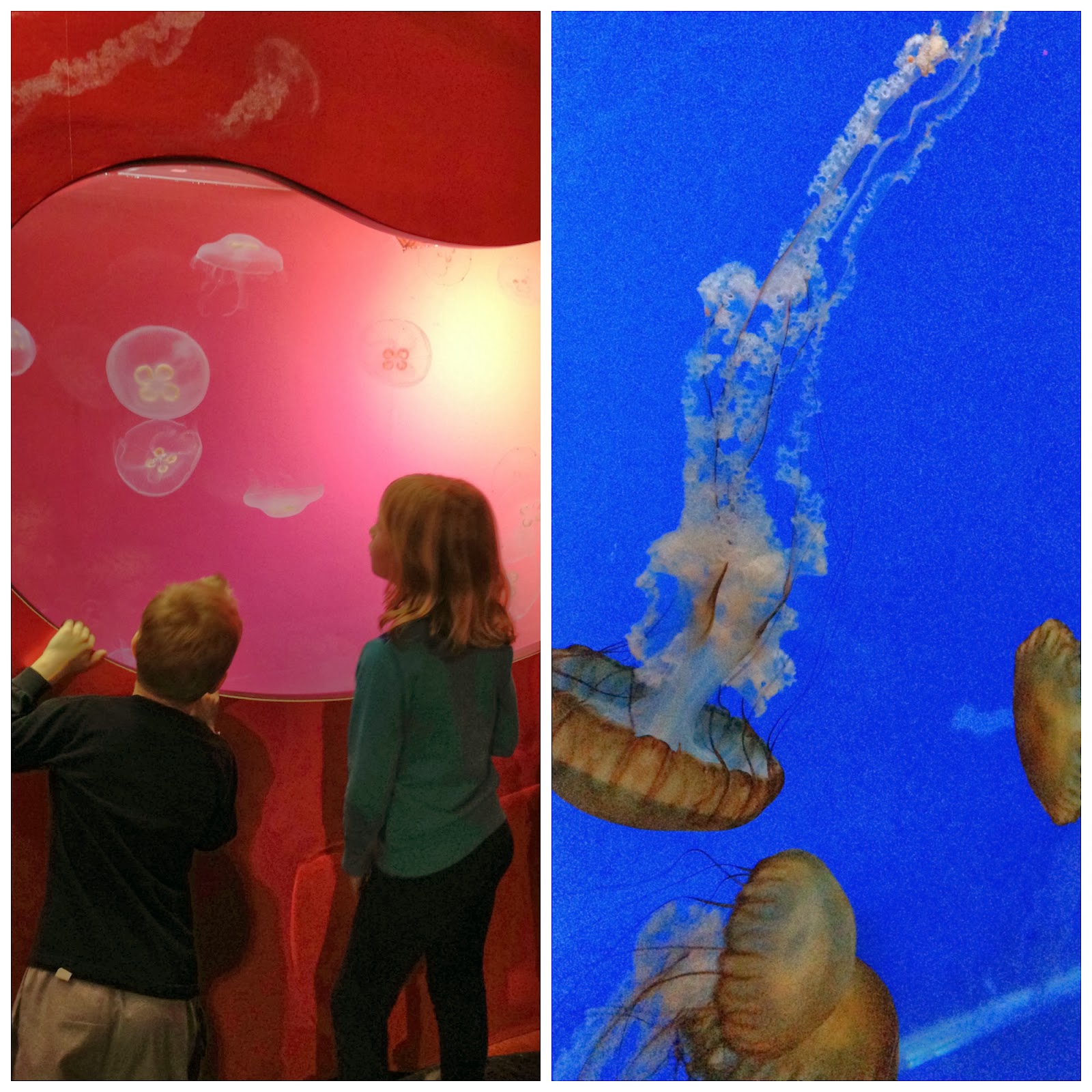 Jellies Exhibit at Shedd Aquarium in Chicago