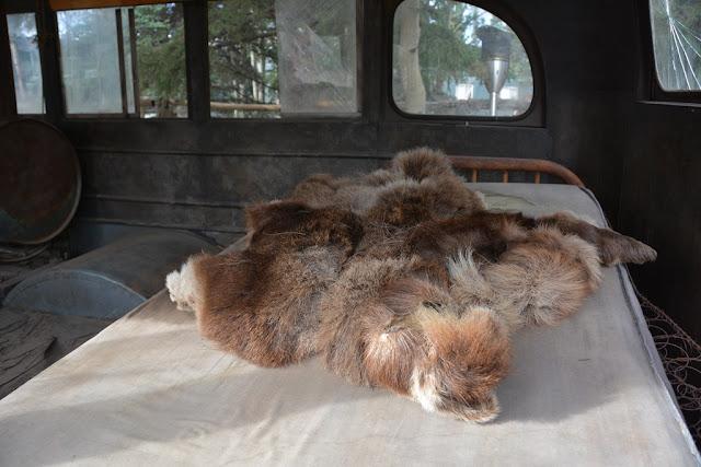 Into the wild bus fur