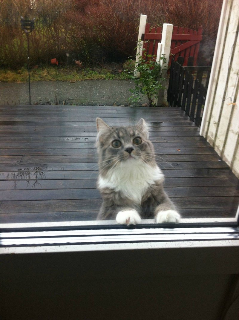 funny cat pictures, can i come in