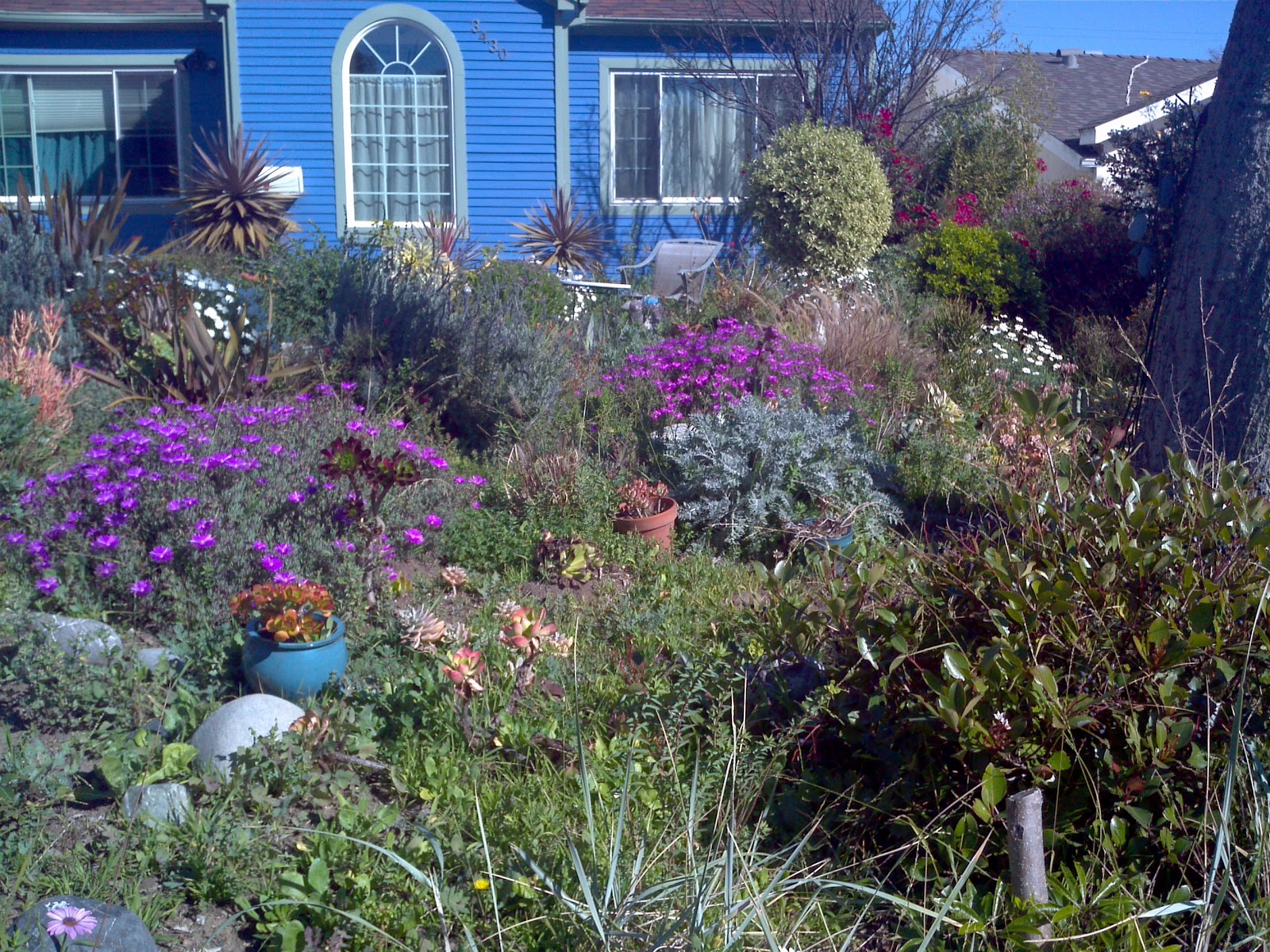 mar vista green garden showcase february 2012