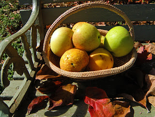 Basket of Late Season Apples on Bench with Fallen Leaves