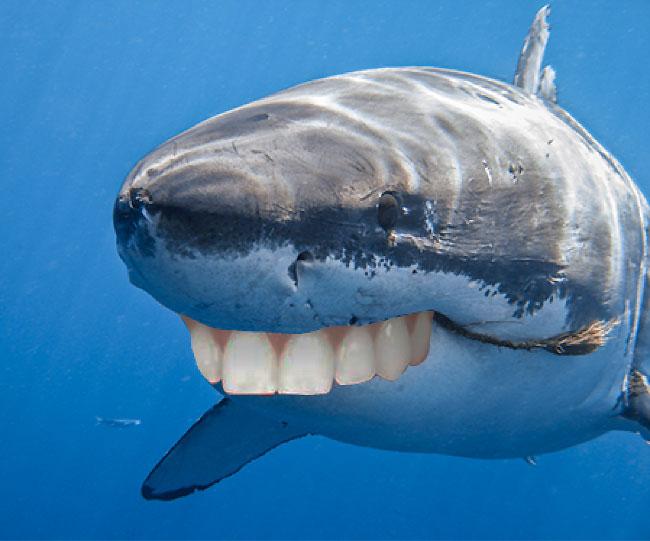 Sharks with human teeth - photo#1