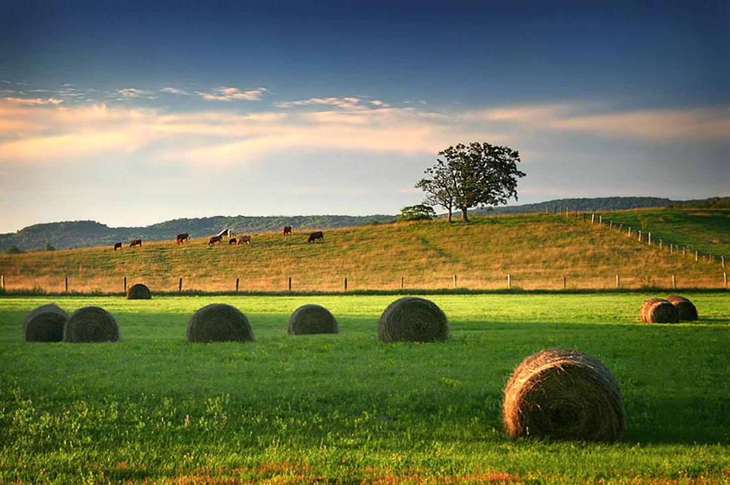image Una paja en el campo al aire